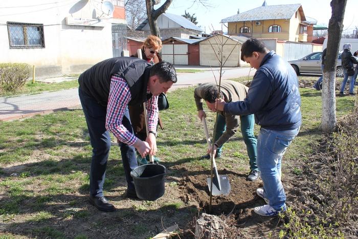 plantare titu pomi